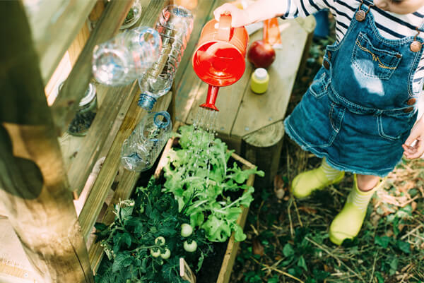 Plum Discovery Mud Pie Kitchen - Ecosystem